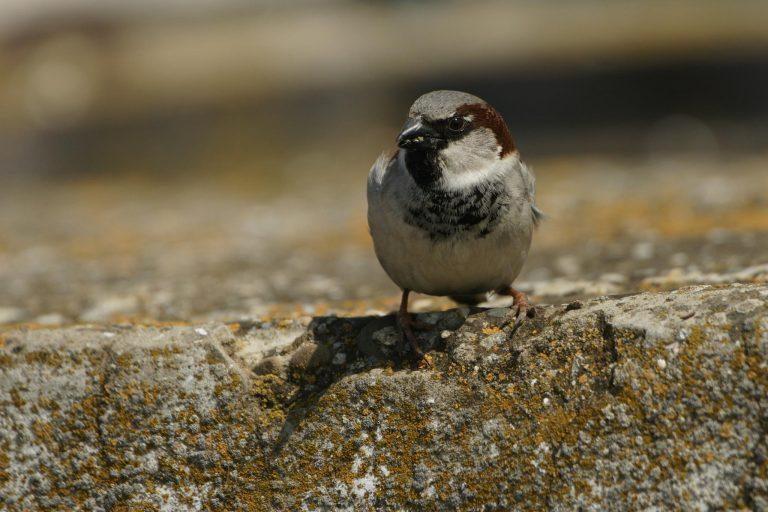 Specii Comune De Păsări Din România și Europa Fauna Cum